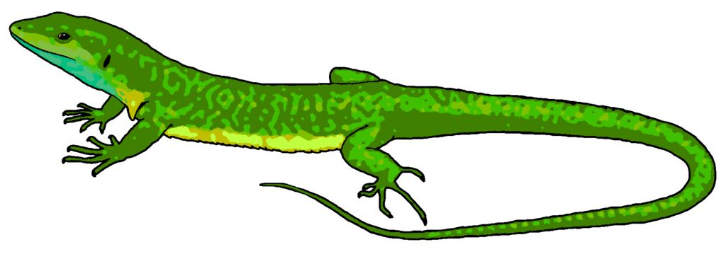 Lizard clipart Lizard ClipartMe Clip Print Art