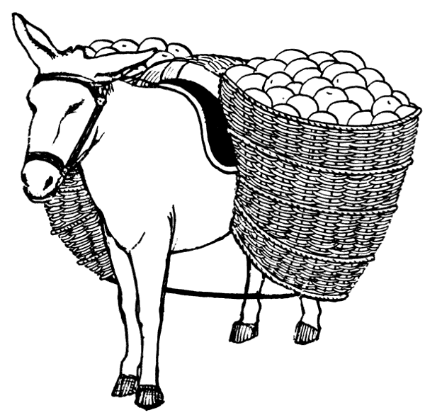 Ocelot clipart drawing Images Clipart Donkey Donkey Clipart