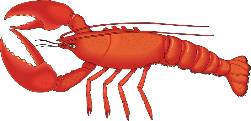 Lobster clipart Com Cliparting Clipart Lobster 2