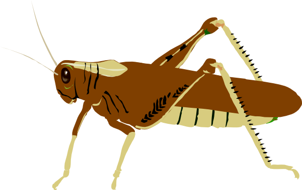 Brown clipart cricket #65 79 Clipart art locust