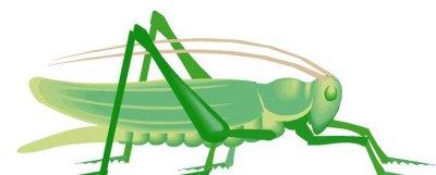 Locust clipart Locust Free Art Panda Images