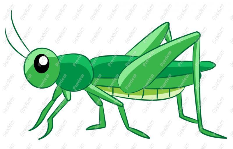 Locust clipart #4 79 art #4 Clipart