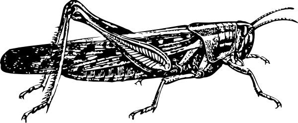 Locust clipart Svg Free clip art Locust