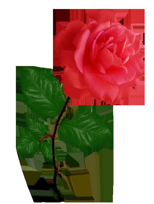 Red Flower clipart long #8