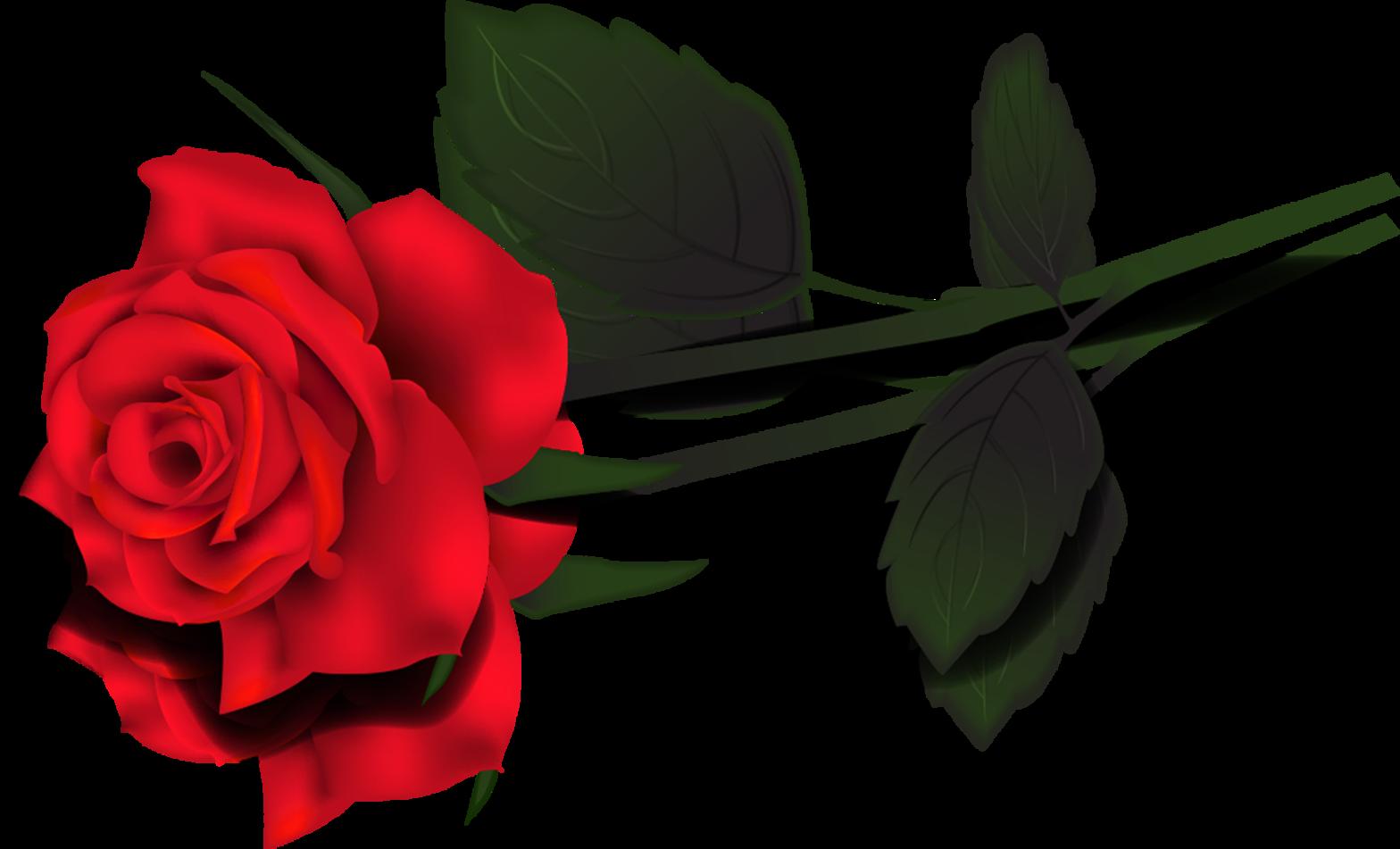 Rose clipart long stem rose #12