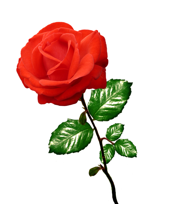 Red Flower clipart r0se #2