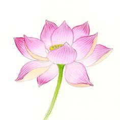 Scenery clipart lotus flower #3