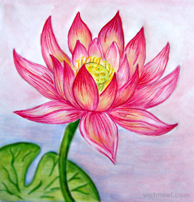 Drawn rose side Pencil Color  Color Drawings