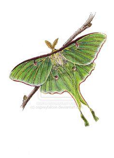 Luna Moth clipart Luna Vintage moth Image