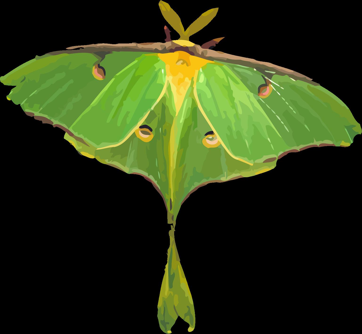 Luna Moth clipart Actias luna Moth Moth /