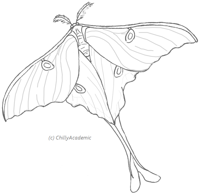 Luna Moth clipart Related Moth Moth & Luna