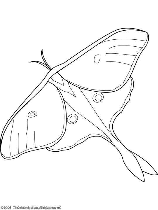 "Luna Moth clipart Luna Moth"" at called a"