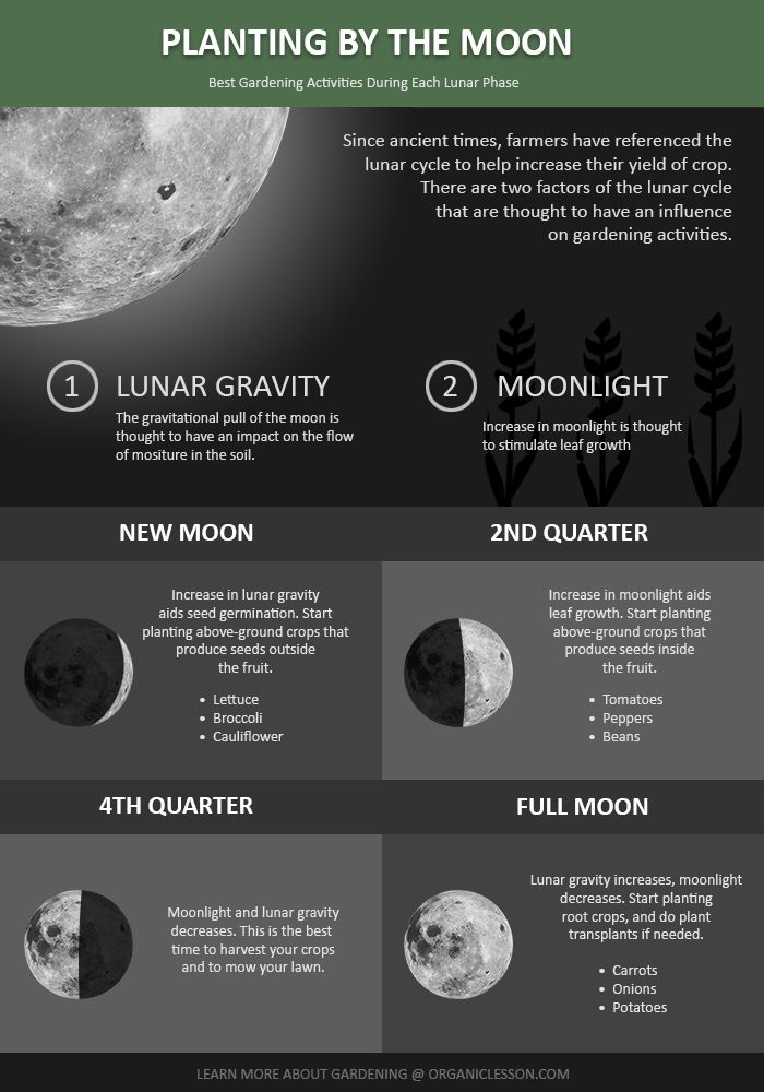 Lunar clipart ground  using of to your