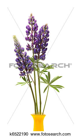 Lupine clipart Photography Lupin In Stock k6522190