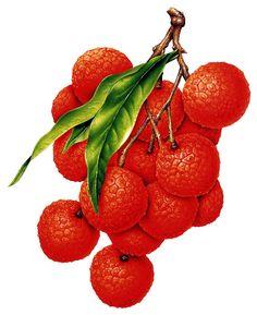 Lychee clipart leech Photo élelmiszer Fruit Picasa gyümölcs