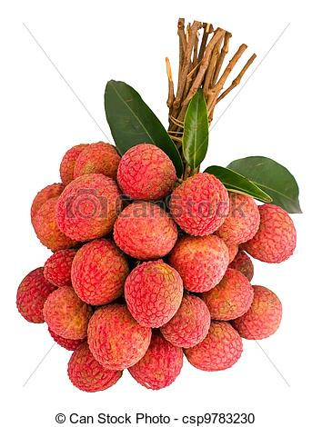 Lychee clipart lychee nut Litchi green Photography  csp9783230
