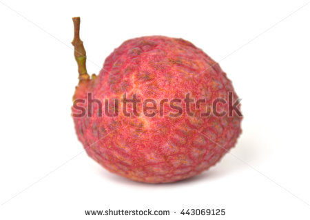 Lychee clipart liche Royalty fruits chinensis Litchi Clipground