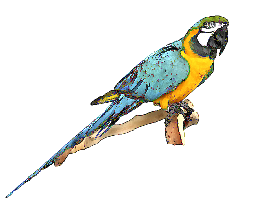 Scarlet Macaw clipart blue macaw #13