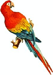 Scarlet Macaw clipart #4