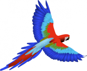 Scarlet Macaw clipart #6