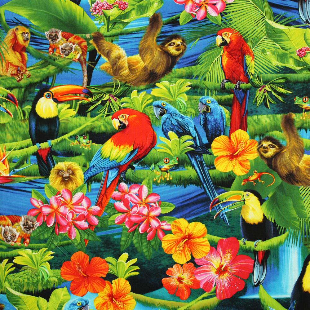 Toucanet clipart rainforest monkey #10
