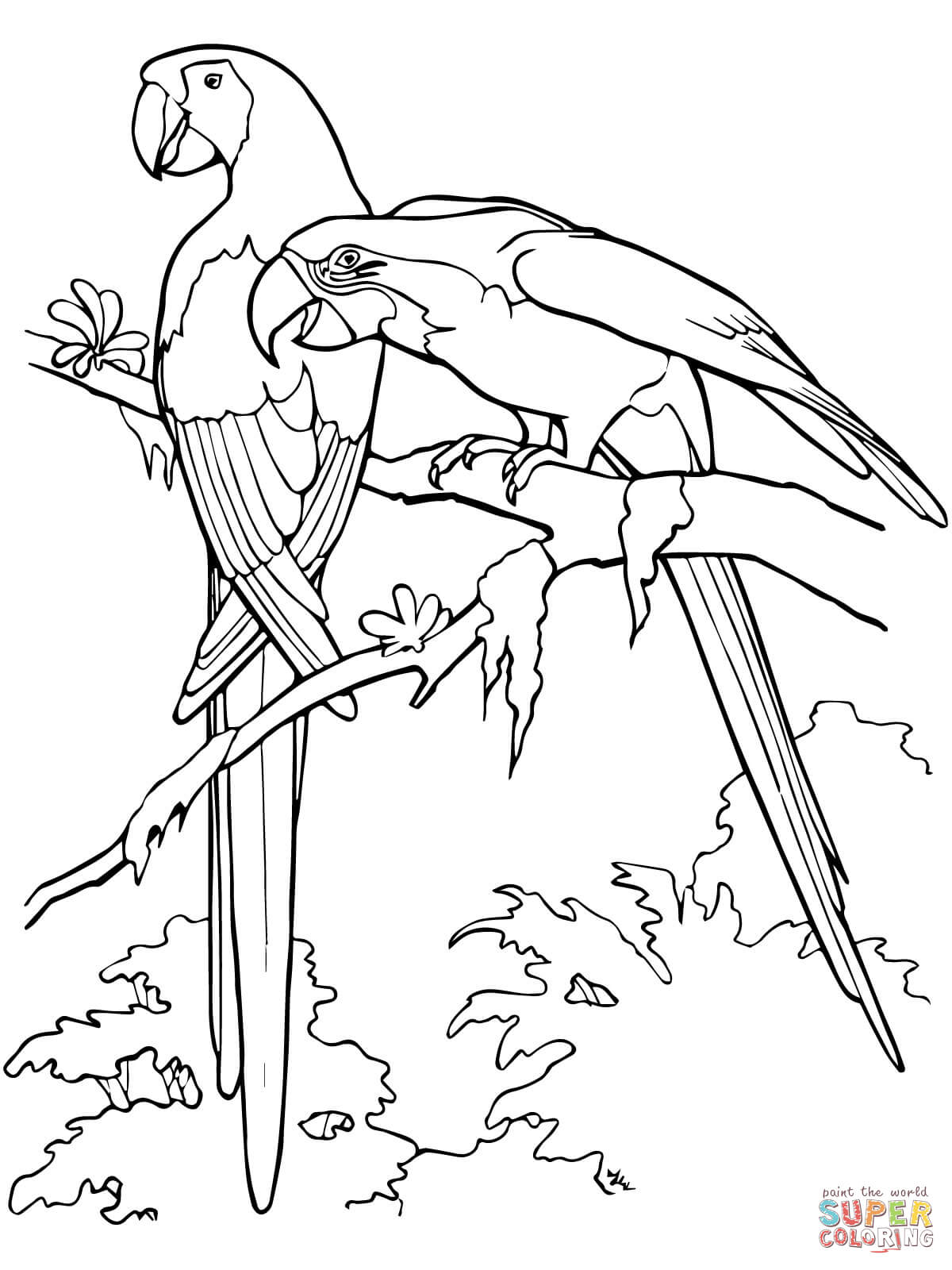 Blue-and-yellow Macaw clipart Coloring Pages coloring Macaw Coloring