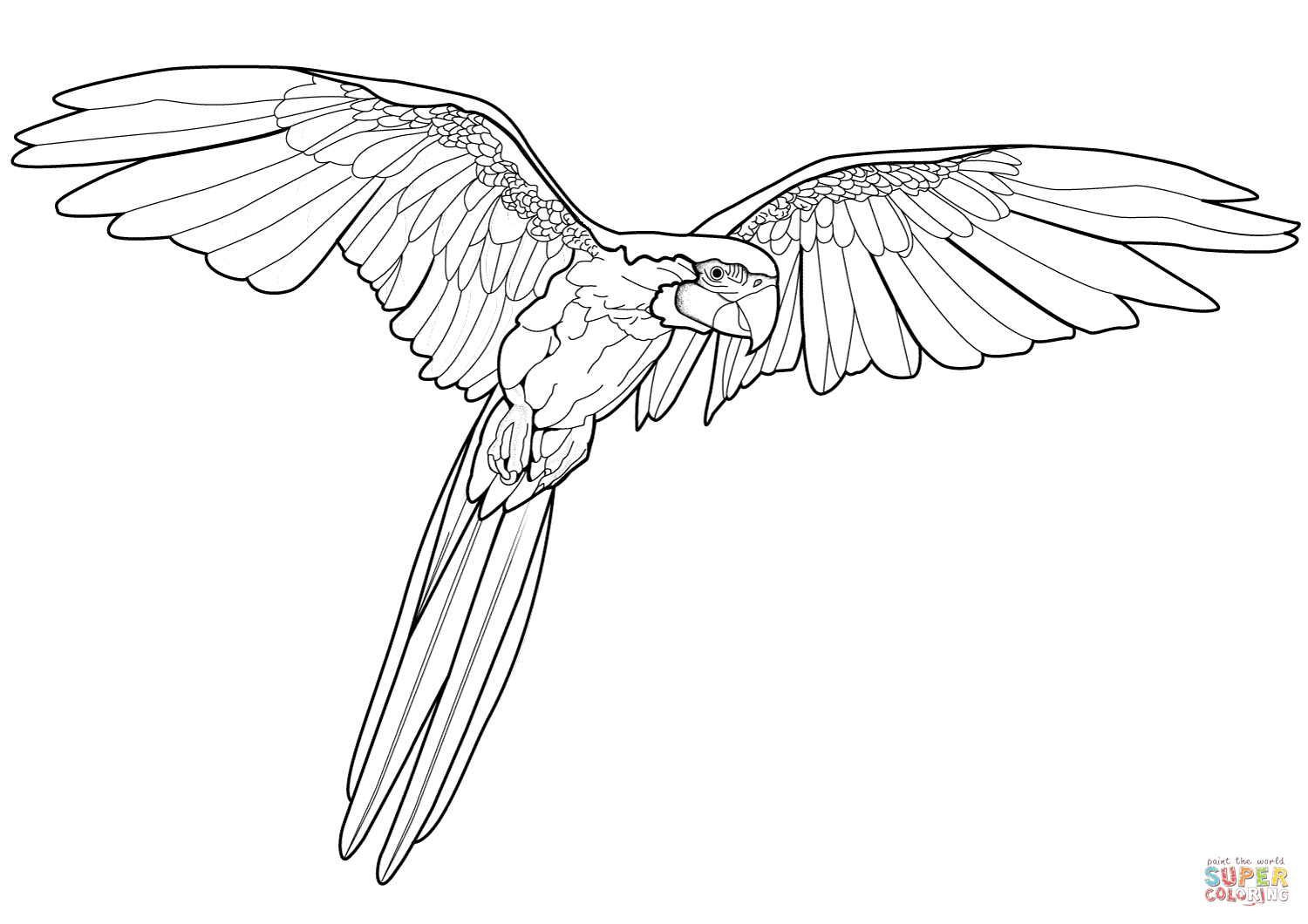 Blue-and-yellow Macaw clipart Flying Printable Free the Macaw