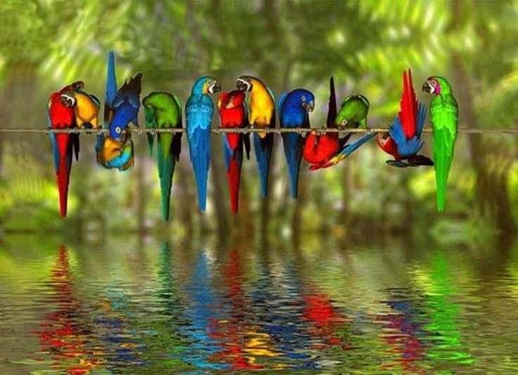 Parrot clipart rainbow color Pinterest about on 32 colorful