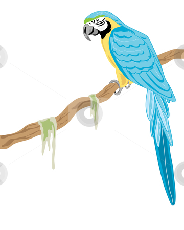 Blue-and-yellow Macaw clipart Gold vector stock and macaw