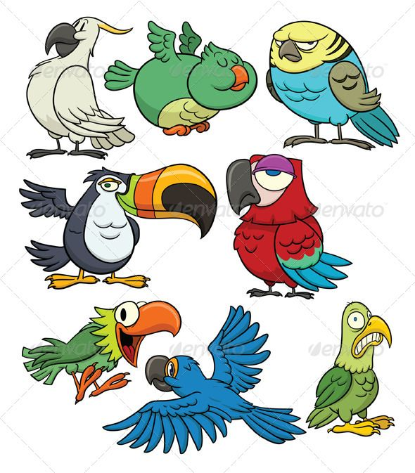 Pigeon clipart air animal Best Tropical on images birds