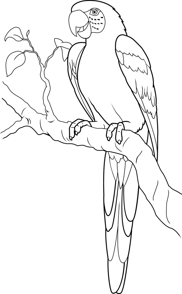 Scarlet Macaw clipart drawing #2