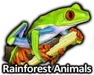 Parrot clipart rainforest frog Illustrations at of  Illustrations