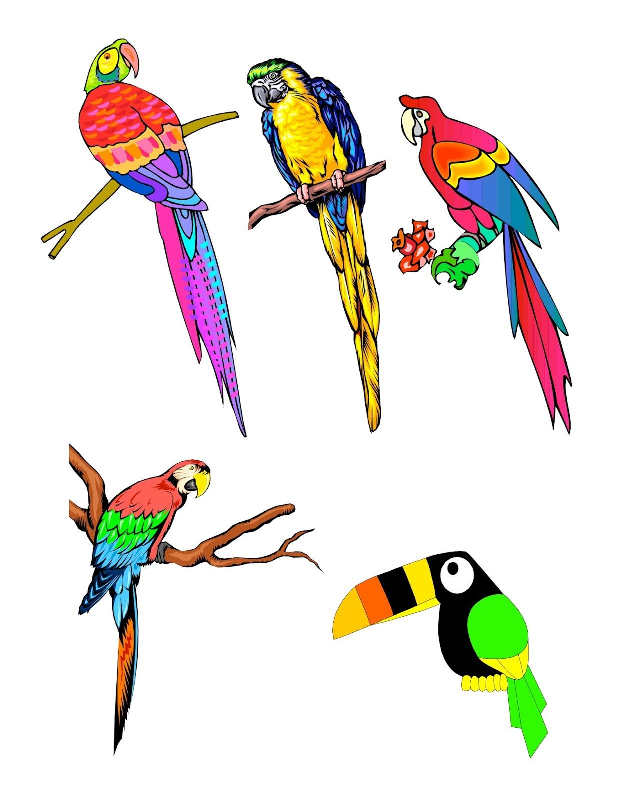 Drawn brds tropical bird Tropical