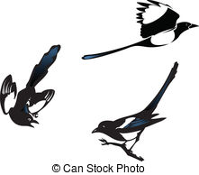 Magpie clipart Magpies 292 Three  Illustrations