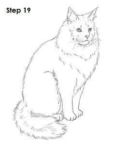Maine Coon clipart 19 clipartsgram Coon Coon Clipart