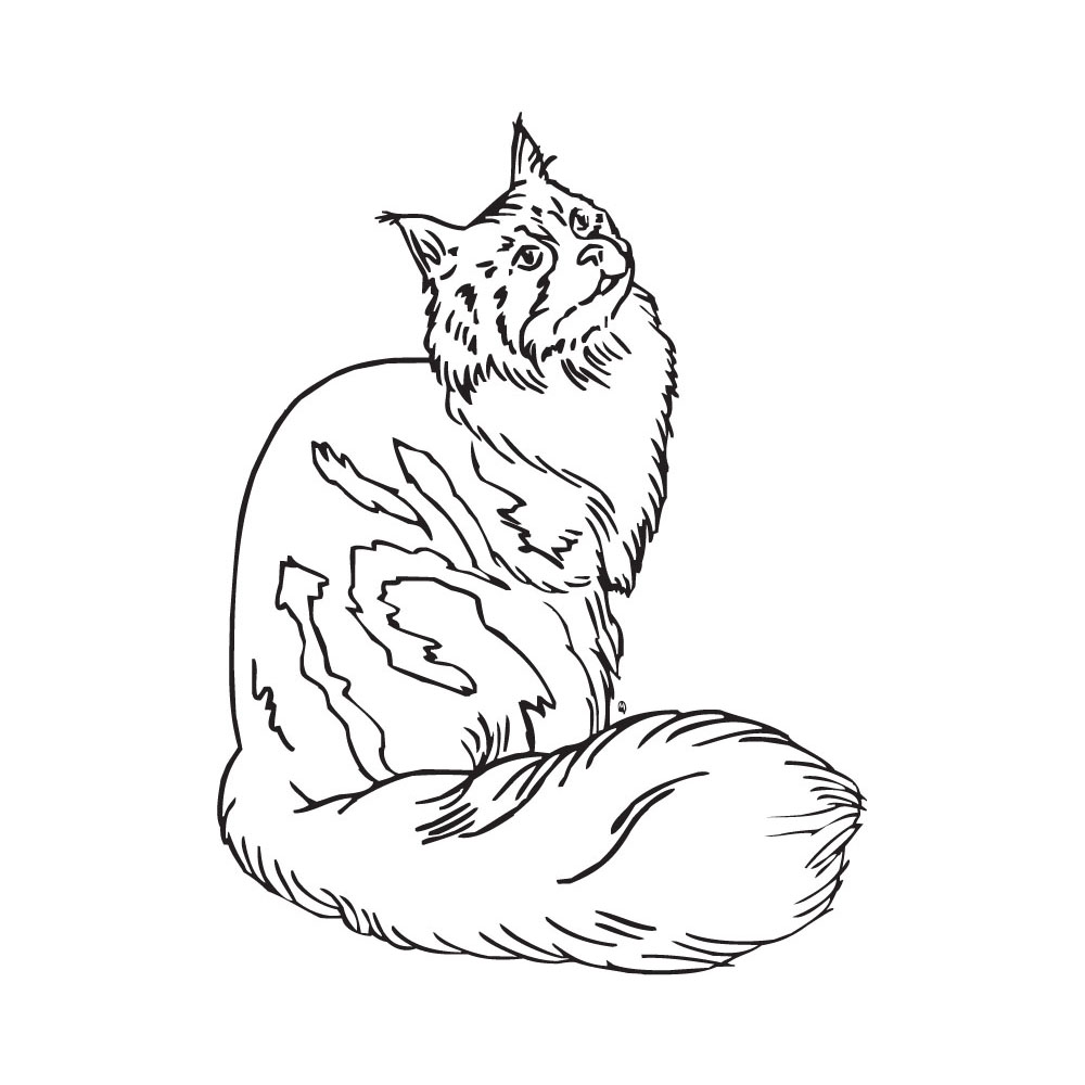 Maine Coon clipart Free Clipart Maine Panda Free