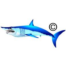 Mako Shark clipart Wildlife Marine Mad Mako clipart