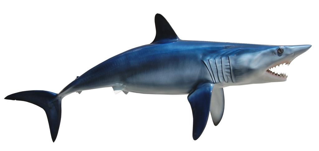 Mako Shark clipart Mako Mounts King Sailfish Mounts