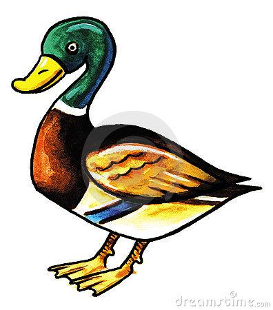 Mallard clipart Clipart Mallard photo#6 Duck Mallard