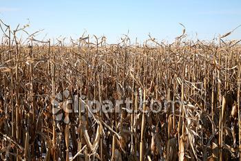 Malt clipart crop Field crop Edition dead farming