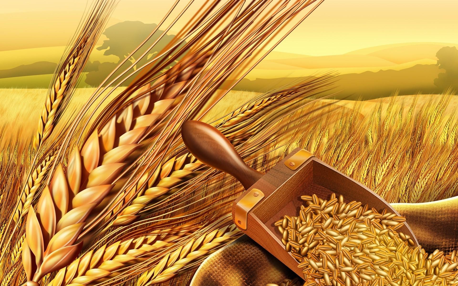 Malt clipart crop Zone Wheat Crop Clipart Crop