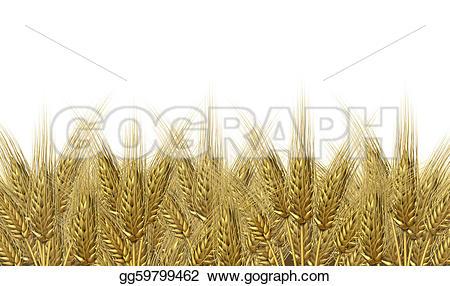 Malt clipart oat plant Organic of Stock baked