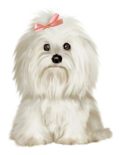 Maltese clipart Bichon Maltese on puppy colored