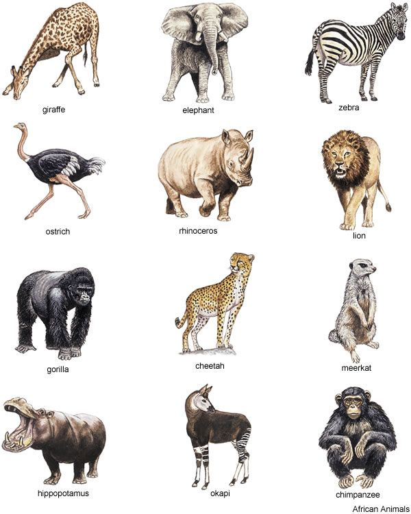 Wildlife clipart african wildlife Illustration Full Full Animal Book