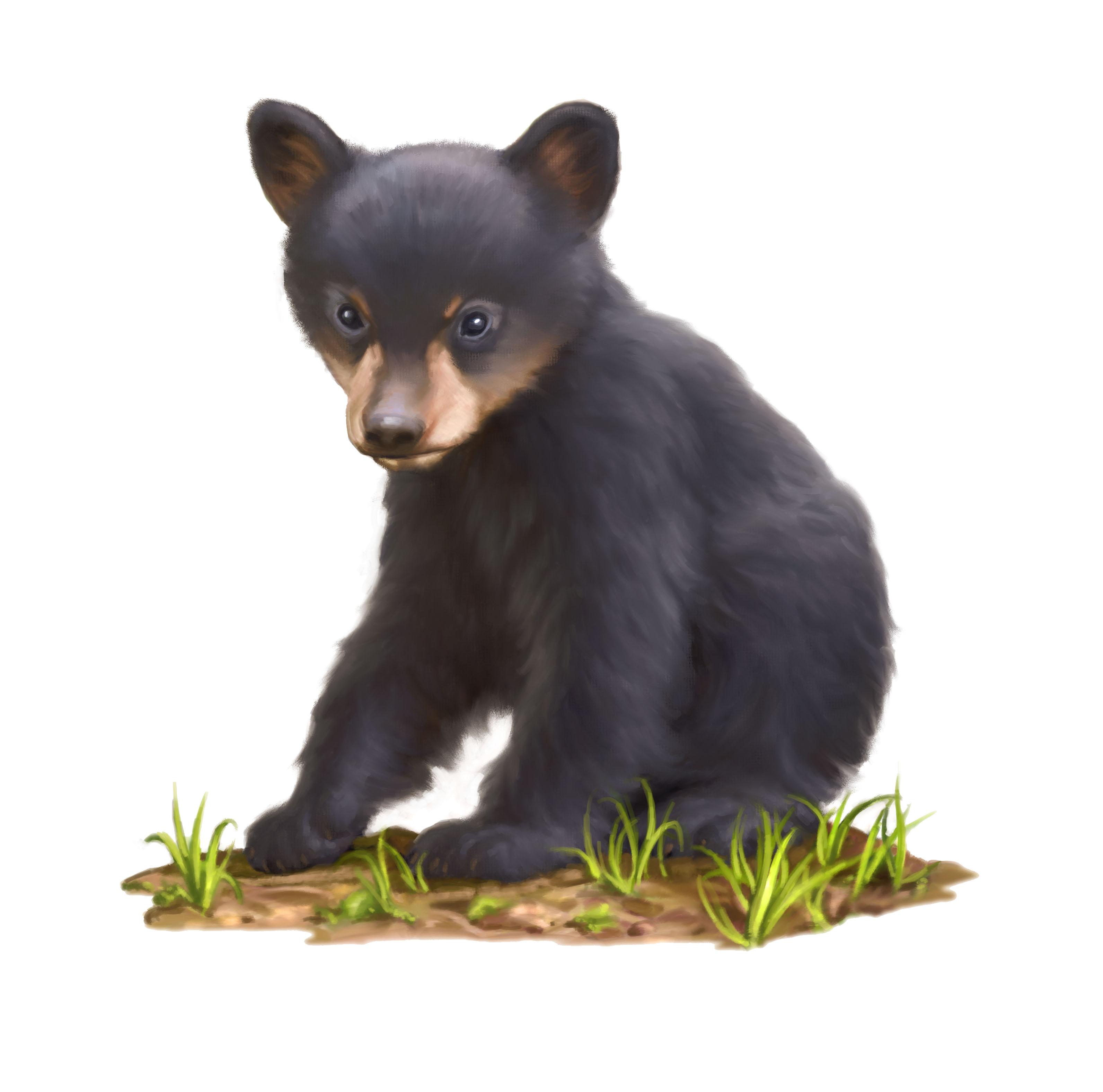 Bear Cub clipart mammal Bear Cliparts discovery · clipart