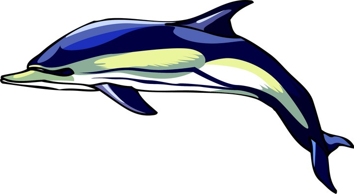 Bottlenose Dolphin clipart dolphin swimming Clipart Free Clipart Dolphin Dolphin