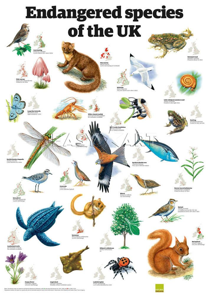 Animal Kingdom clipart endangered animal Guardian the List UK Best