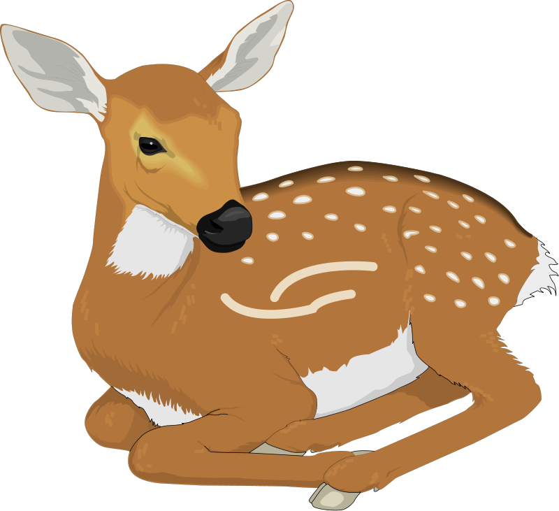 Baby Animal clipart transparent background Clipart for kids Deer Art