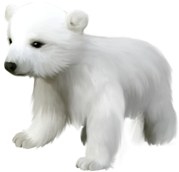 Bear Cub clipart polar animal Pinterest Small Polar best on