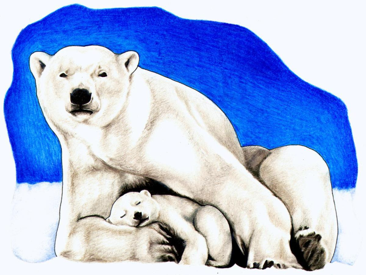 Bear Cub clipart snow bear Art clip 5 Polar #15187